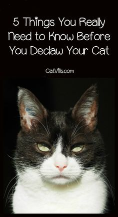 Thinking about whether or not to declaw your cat? Check out five things you really need to know before making the decision!