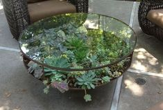 glass succulent table - Google Search
