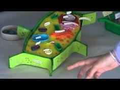 Las células en 3D - YouTube
