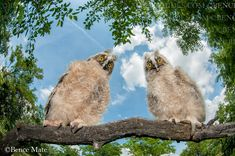 Bence Mate is a Hungarian wildlife photographer, and the most efficient participant in the history of the BBC Wildlife Photographer of The Year competition. Glass Photography, Animal Kingdom, Wildlife, Animals, Image, Birds, English, Animaux, Bird
