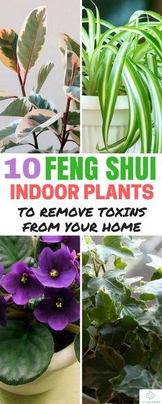 Feng Shui Indoor Plants #fengshui #homedecor #interiors