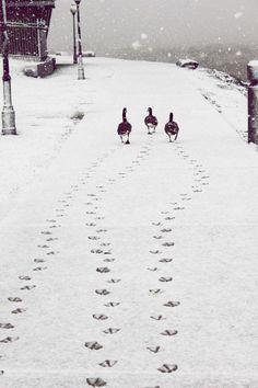 зимние пейзажи следы на снегу (20 фото)