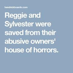 Reggie and Sylvester were saved from their abusive owners' house of horrors.