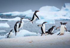 пингвин - Поиск в Google