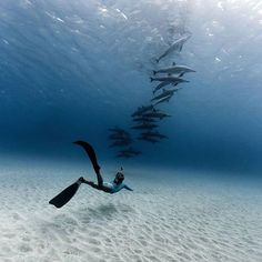 """Oahu, Hawaii. """"It's important not to chase spinner dolphins. If they are comfortable, they'll swim by. On this particular morning, while out freediving, the dolphins stayed close. Moments like these make you forget the challenges of freediving and of holding your breath for so long."""" Photo by @galen.neil"""
