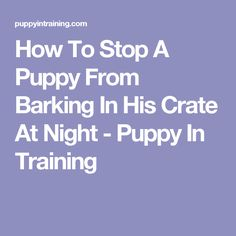 How To Stop A Puppy From Barking In His Crate At Night - Puppy In Training