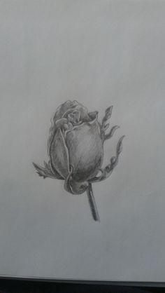 Rose #bleistift #zeichnung #rose #schatten #pen #drawing #selfmade #drawing #flower #blume
