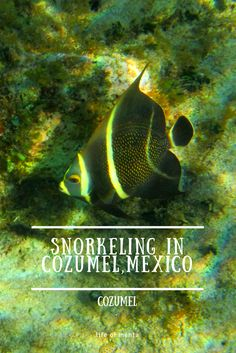 The island of Cozumel in Mexico is one of the best places to snorkel! Colorful fish and easy access to great rocky beaches.  #travel #snorkeling