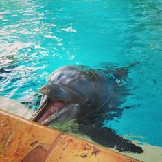 Dolphins communicate like people! Cute smile :)