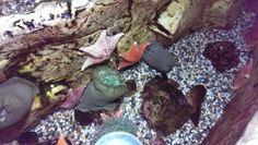 Homeschool at the Aquarium of the Pacific