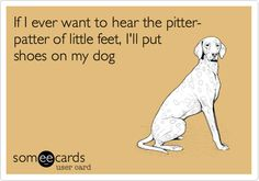 If I ever want to hear the pitter-patter of little feet, I'll put shoes on my dog.
