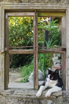 A cat's favorite perch is a window with a view -even if it isn't a window any longer...