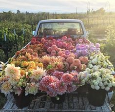 This bunch of flowers on a truck is the perfect floral inspiration. Bunch Of Flowers, My Flower, Pretty Flowers, Flower Truck, Fresh Flowers, Prettiest Flowers, Potted Flowers, Images Of Flowers, Field Of Flowers