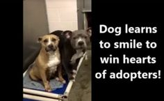 Daily Cute: Shelter Staff Teaches Dog To Smile | Care2 Healthy Living
