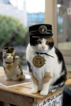 Tama the calico cat who is the station master at the Kinokawa railway station, Wakayama Prefecture Japan. As station master her primary duty is to greet passengers. The position comes with a stationmaster's hat; in lieu of a salary, the railway provides Tama with free cat food. Note: Tama passed away June 22, 2015. She was 16 years old.