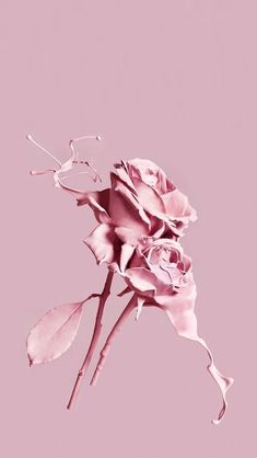 Pink roses aesthetic wallpapers, pink aesthetic, everything pink, wallpaper b Tumblr Wallpaper, Flower Wallpaper, Wallpaper Backgrounds, Iphone Wallpaper, Screen Wallpaper, Aesthetic Roses, Purple Aesthetic, Aesthetic Photo, Rose Pastel