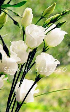 Eustoma Grandiflorum Bonsai Seeds 100Pcs Lisianthus Flower Seeds Perennial Ornamental Plant Sementes de Flores Free Shipping