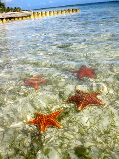 Starfish point, Grand Cayman, AC loved this!