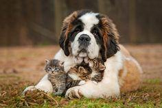 gatto-con-cane2