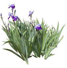 Resultado de imagen para photoscape plants