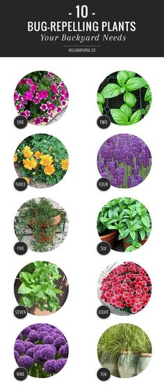 Front Yard Landscaping 10 Plants That Repel Bugs Naturally - A few strategically placed bug repelling plants will help ward off insects, allowing you to dine al fresco in peace. Outdoor Plants, Outdoor Gardens, Backyard Plants, Pool Plants, Large Backyard, Small Patio, Backyard Patio, Fence Plants, Balcony Plants