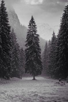 16 New Ideas For Pine Tree Landscaping Evergreen Winter Wonderland Winter Szenen, I Love Winter, Winter Time, Winter Light, Nature Sauvage, All Nature, Nature Tree, Winter Beauty, Beautiful World