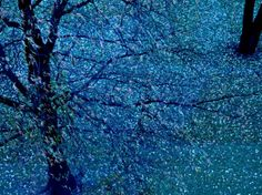 Autumn Tree in Blue, Green, and Purple Valokuvavedos tekijänä Robert Cattan AllPosters.fi-sivustossa