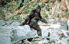 Bigfoot oder Affenkostüm...?   http://grenzwissenschaft-aktuell.blogspot.de/2014/12/bigfoot-oder-affenkostum.html  Abb.: Gimlin/Patterson