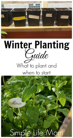 A winter planting guide gets you thinking about what to plant. What you plant depends on what you eat, and how much room you have so start planning.