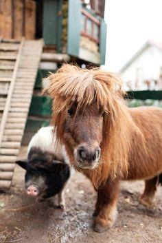 mini pigs, mini horses, mini garden