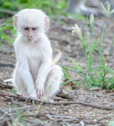 Rare Albino Animals, Unusual Animals, Super Cute Animals, Cute Funny Animals, Cute Animal Photos, Animal Pictures, Beautiful Cats, Animals Beautiful, Tier Fotos