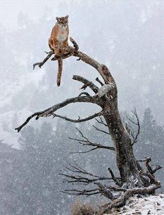 This beautiful photo of a mountain lion is haunting...