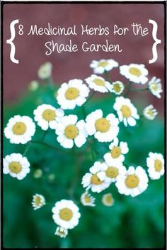 There are several, beautiful, easy-to-grow medicinal herbs that grow well in shaded gardens. These top 8 are among my favorites. | www.refor...