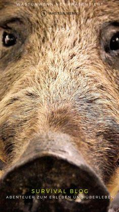 Survival Blog, Adventure, Group, Board, Nature, Animals, Outdoor, Shopping, Wild Boar