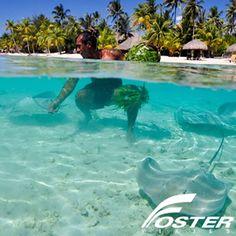 Bora Bora es una isla paradisíaca de la Polinesia ubicada al noreste de Tahití, en pleno Océano Pacífico. Este exótico destino presenta a sus visitantes un enorme macizo volcánico, que da vida a una hermosa postal junto a un arrecife de coral y una espectacular laguna interior de color turquesa. - www.fosterviajes.com