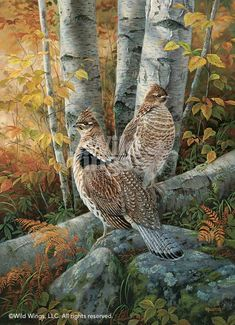 """Rosemary Millette Late Season Solitude- Ruffed Grouse = I would label this painting """"The Sentinels"""" Wildlife Paintings, Wildlife Art, Beautiful Birds, Animals Beautiful, Grouse Hunting, Hunting Art, Decoupage Vintage, Game Birds, Bird Pictures"""