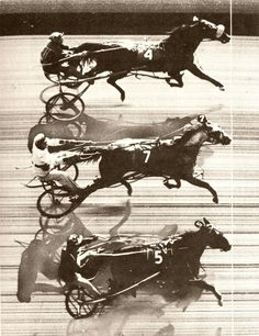 The first recorded triple dead-heat in a harness race - New Jersey, 1954 Standardbred Horse, Thoroughbred Horse, Horse Harness, Harness Racing, King Horse, Horse Ears, Sport Of Kings, Most Beautiful Horses, Racing News