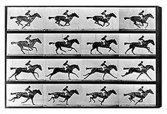 Horse In Motion II