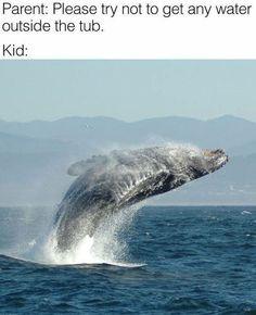Santa Cruz California, California California, Monterey California, Kinds Of Whales, Elkhorn Slough, Camping Cornwall, Monterey Bay Aquarium, Top Travel Destinations, Camping Lights