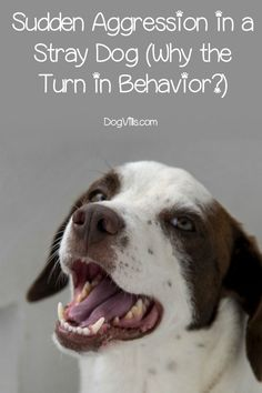 Why does a formerly friendly stray show aggression seemingly out of the blue one day? Find out the answer, plus what you can do to help the dog. Dog House Air Conditioner, Dog Training Techniques, Best Dog Training, Aggressive Dog, Funny Dog Pictures, Old Dogs, Dog Behavior, Stray Dog, Dog Care