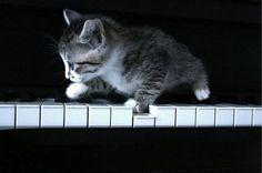 piano player....