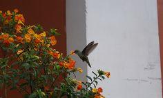 Attracting Hummingbirds & Butterflies to Your Garden