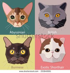 stock-vector-set-of-flat-cats-faces-icons-popular-breeds-abyssinian-british-burmese-exotic-shorthair-253849561.jpg (450×470)