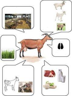 12 animals and their details Farm Activities, Animal Activities, Infant Activities, Science For Kids, Science And Nature, Farm Animals, Animals And Pets, Theme Nature, Animal Habitats
