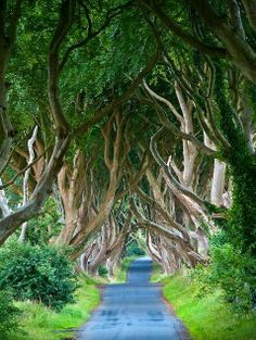 The Dark Hedges, Northern Ireland: The Infinite Gallery