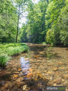 Hike the Cohutta Wilderness to the Conasauga River's grassy, wildflower-filled banks