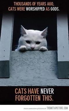 Cats never forget...