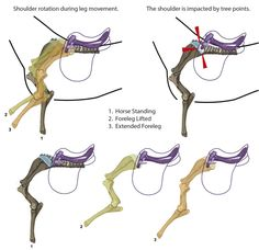 Saddle Fit and Cartilage Damage