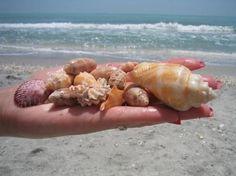 Best Beach for Shelling: Sanibel Island (