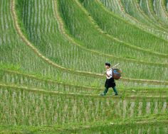 Dragon's Backbone / Guangxi Province / China
